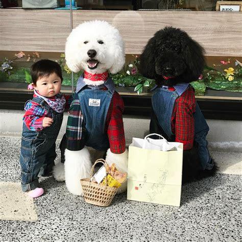 Baju Anjing Polkadot Neck gemes banget bayi dan anjing ini sering pakai baju kembar