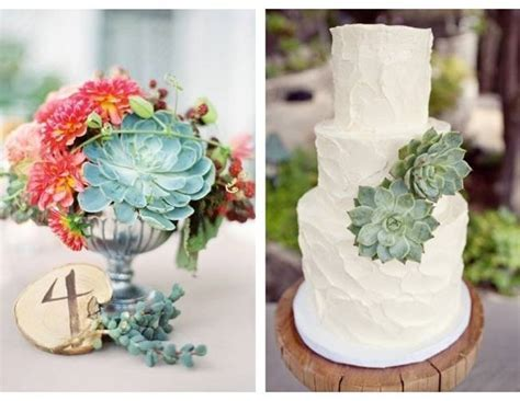 Cheap Wedding Decoration Ideas: Succulents   Ann's Bridal