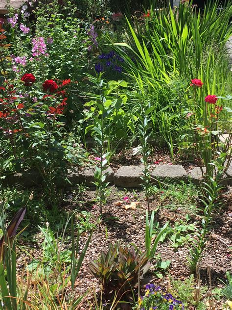 how to start a flower bed a nerd in the garden busy spring m31 publishing