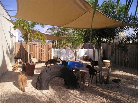 backyard ideas for dogs 25 best ideas about dog backyard on pinterest backyards