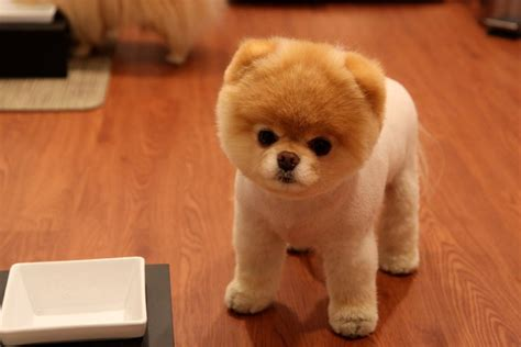 puffball puppy puffball puppy