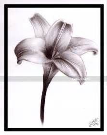 Tiger Lily The Flower - lily flowers drawings lily embroidery patterns
