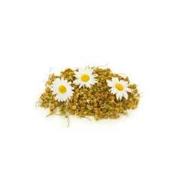 fiori camomilla pinta camomilla in fiori gr 250