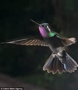 Believe Light Blue Anye wildlife photographer nicolas reusens captures birds bats