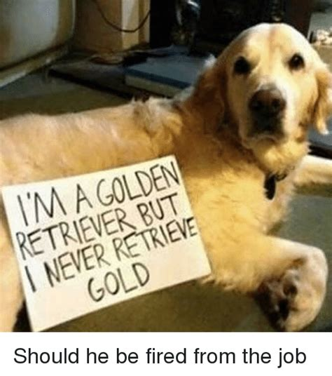 why do golden retrievers eat everything 25 best memes about dogs dogs memes