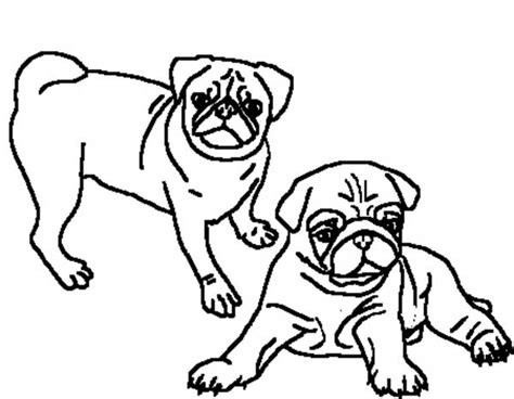 pug color two beautiful pug coloring page color