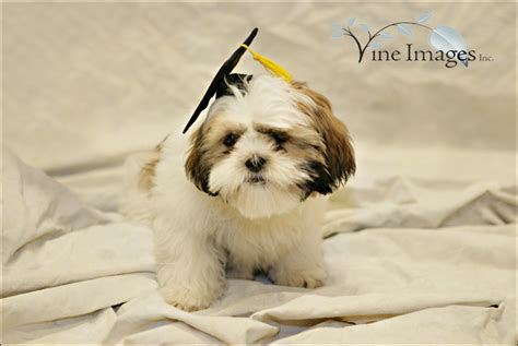 petsmart puppy school paco graduates from puppy school at petsmart with his friends 187 vine images inc