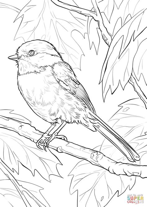 chickadee bird coloring page black capped chickadee coloring page free printable
