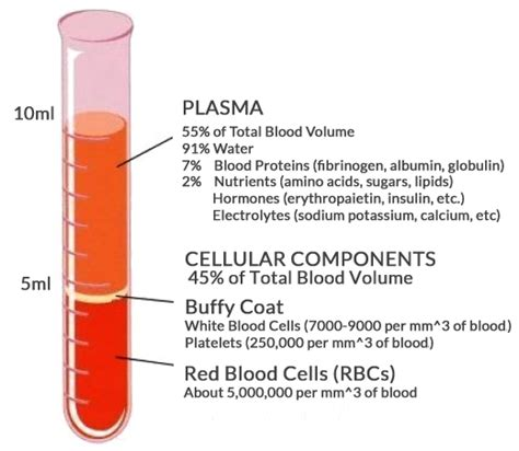 can platelet rich plasma stop hair loss and grow new hair barcelona trial findings show prp can benefit genetic hair