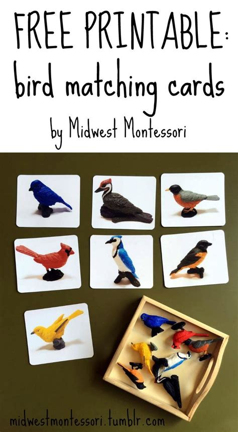 printable bird quiz 146 best unit birds images on pinterest preschool