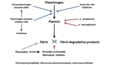 mechanism of blood clotting flowchart blood clotting mechanism flowchart create a flowchart