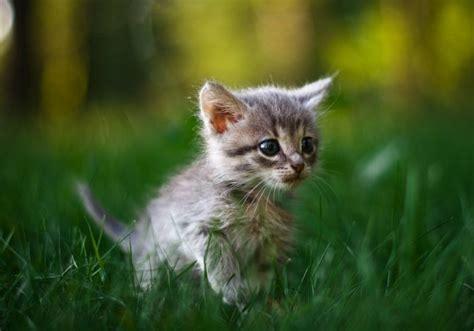 cute kittens  pics