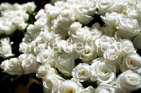 immagini di fiori bianchi fiori bianchi silviadeifiori