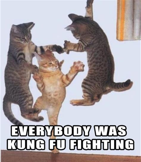 Kung Fu Meme - fighting memes image memes at relatably com