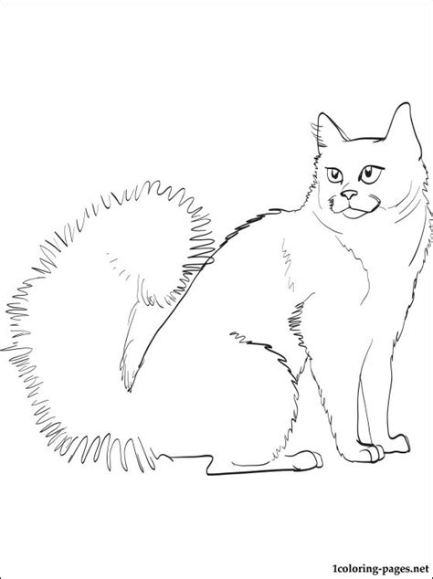 british shorthair cat coloring page coloring pages
