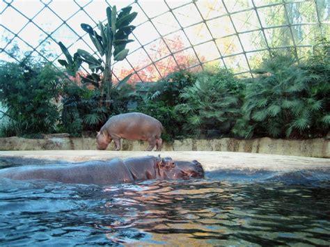 Zoologischer Garten Club by Berlin Berlin Zoo