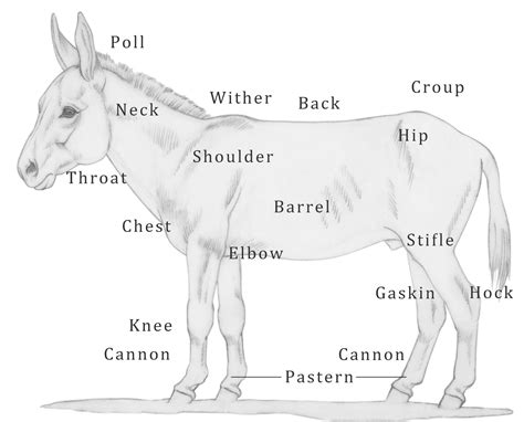 Livestock Barns Code Of Practice For The Care And Handling Of Equines