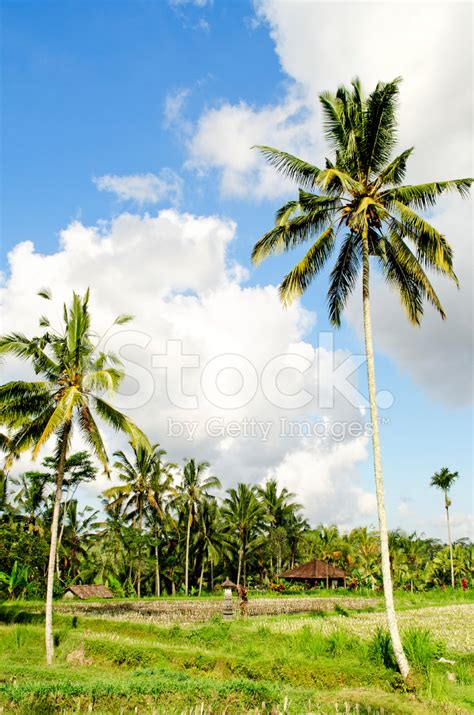 landscape design bali indonesia tropical landscape in bali indonesia stock photos
