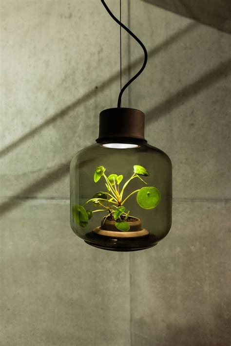 modern greenhouse lamps  window  sunless plant