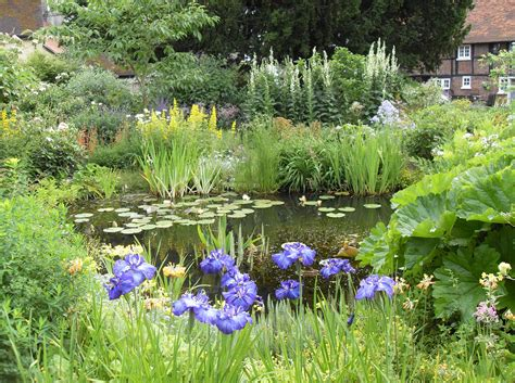 Bog Garden by Bog Gardens Exsplained Lilies Water Gardens