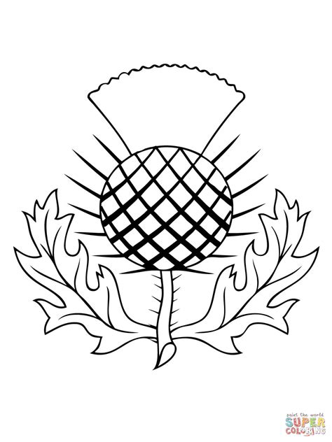 thistle color the thistle of scotland coloring page free printable