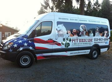 puppy shipping services animals away pet shipping pet relocation pet travel upcomingcarshq