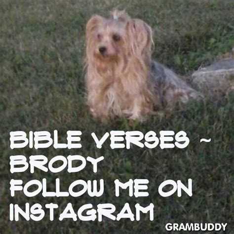 bible verses about dogs pictures with bible verses image breeds picture