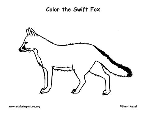 swift fox coloring page fox swift coloring page
