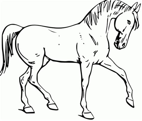 black and white coloring pages of horses fun horse coloring pages for your kids printable