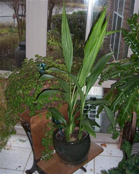 poisonous house plants house plants beautiful but some can be toxic