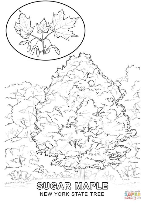 New York State Tree Coloring Page Free Printable New Tree Coloring Pages