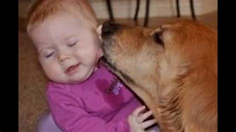 cute dogs and adorable babies compilation youtube cute cats and huge dogs kissing babies compilation 2014