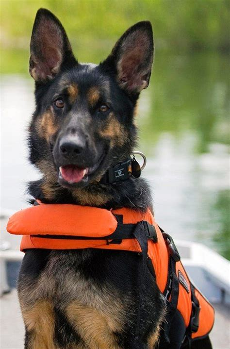 search and rescue dogs search and rescue dogs search and rescue