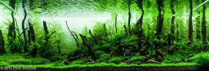 Aquascape Forest by 2013 Aga Aquascaping Contest Entry 555