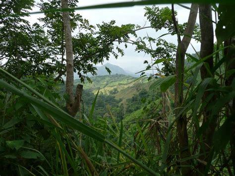 Jungle Landscape Pictures Jungle Landscape Photo