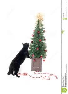 black cat and christmas tree royalty free stock photo