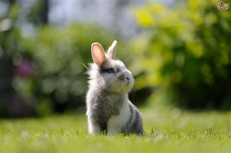 how to keep rabbits out of your backyard how to keep rabbits out of your garden how to convert a garden shed for rabbits
