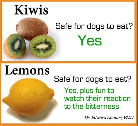 fruits dogs can eat what fruit can dogs eat broadsheet ie