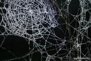 Layered cobwebs so strong yet so very precarious