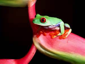 colorful frog colorful frogs photo gallery