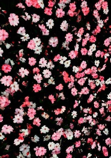 imagenes tumblr flores parede de flores tumblr
