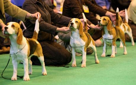 every breed drops crufts after row telegraph