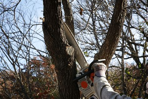 Tree Trimming Ideas Bbb Tips On Yard Cleanup Bbb Of Minnesota And