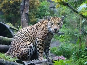 Edinburgh Jaguar Meerkats Picture Of Edinburgh Zoo Edinburgh Tripadvisor