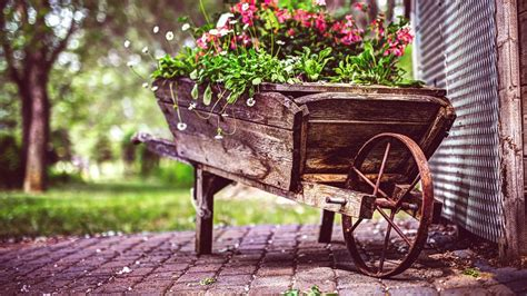 wallpaper 4k vintage vintage flower pot hd flowers 4k wallpapers images