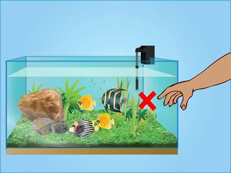pet fish how to take care   How to Take Care of Crayfish: 7 Steps