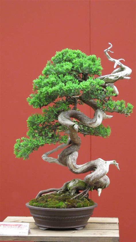 indoor japanese plants 117 best bonsai and japanese tree art images on pinterest