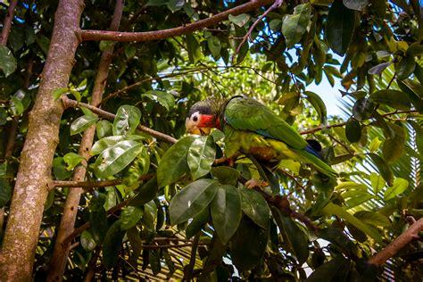 imagenes de animales de la selva garden fotos gratis bosque rama p 225 jaro hoja flor fauna
