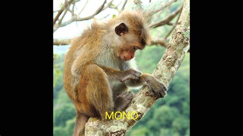 imagenes de animales jungla los animales de la selva videos para ni 241 os youtube