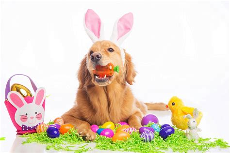 easter puppy keeping your happy healthy at easter